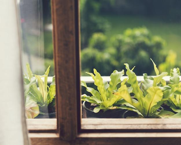 Piękna zieleń przez okno