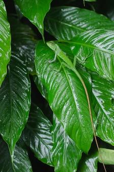 Piękna zielona jaszczurka na tropikalnym zielonym liściu