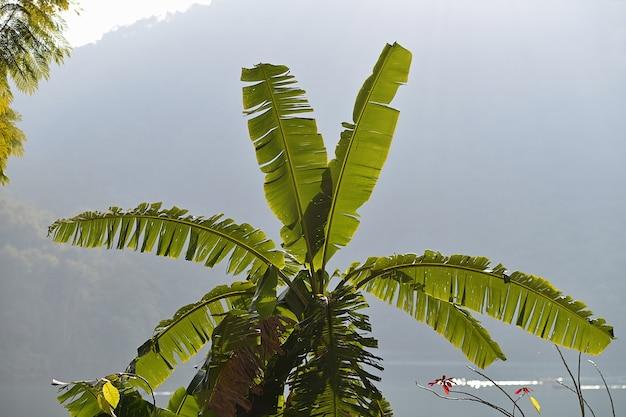 Piękna zielona palma nad jeziorem z górą
