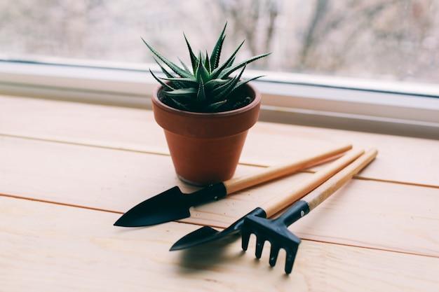 Piękna zielona roślina i narzędzia do pracy w ogrodzie narzędzia i garnek leżą na ciemnym tle drewnianych