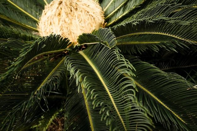 Piękna zielona roślina tropikalna