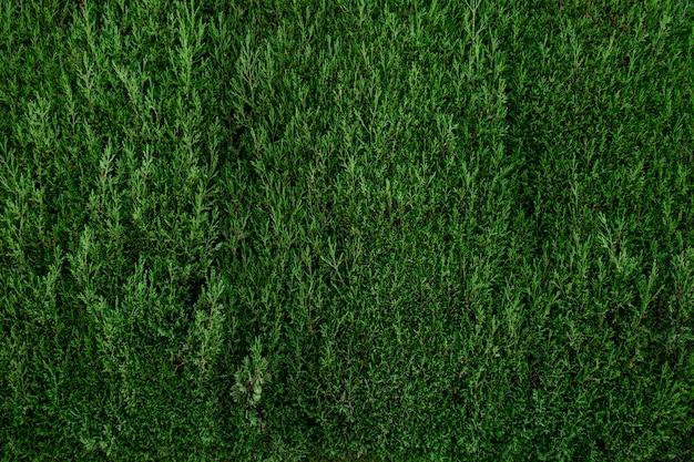 Piękna zielona ściana liści