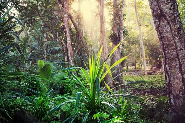 Piękna zielona tropikalna dżungla