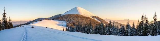 Piękna zimowa panorama. krajobraz ze świerkami sosnowymi, blu