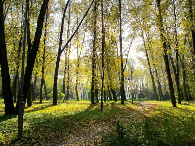 Piękna złota jesień w parku