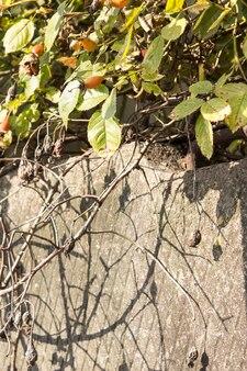 Piękna zwiędła gałązka brylanty późnej jesieni
