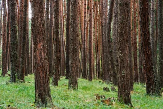 Piękne bajkowe drzewa leśne