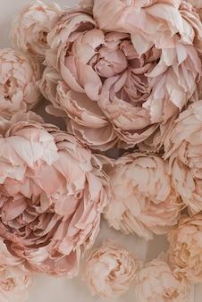 Piękne beżowe kwiaty