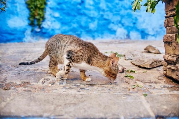 Piękne bezpańskie koty śpią i chodzą po ulicach maroka. piękne bajkowe uliczki maroka i żyjące na nich koty. samotne bezdomne koty