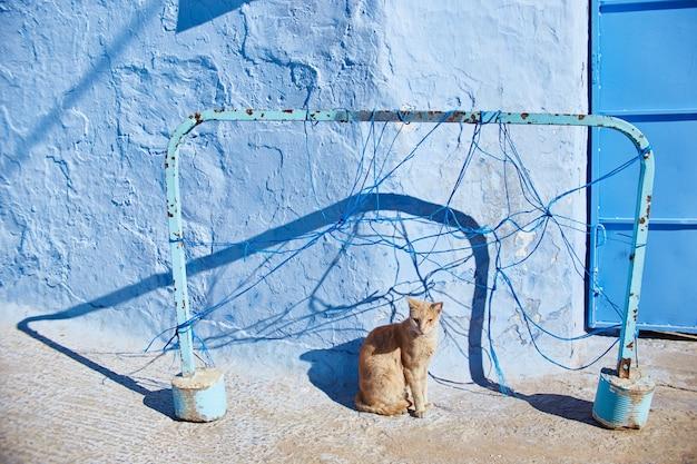 Piękne bezpańskie koty śpią i spacerują po ulicach maroka. piękne bajkowe uliczki maroka i żyjące na nich koty. samotne bezdomne koty