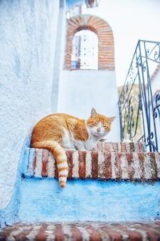 Piękne bezpańskie koty śpią na ulicach maroka