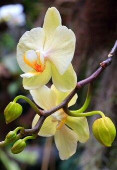Piękne białe kwiaty orchidei. złożone zdjęcie makro ze znaczną głębią ostrości.