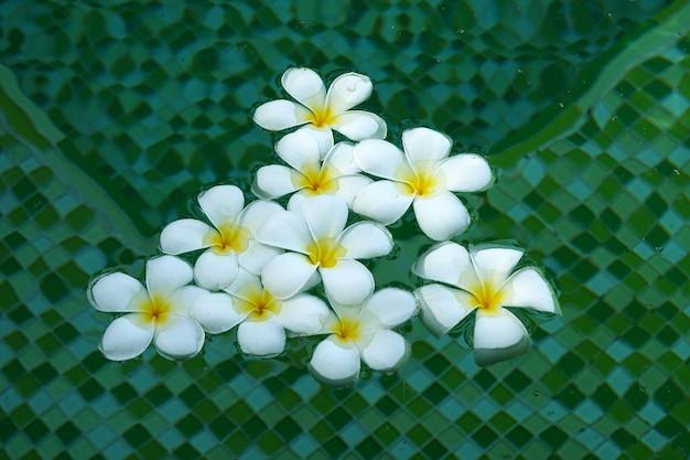 Piękne białe kwiaty plumeria unoszące się w wodzie na zielonym tle