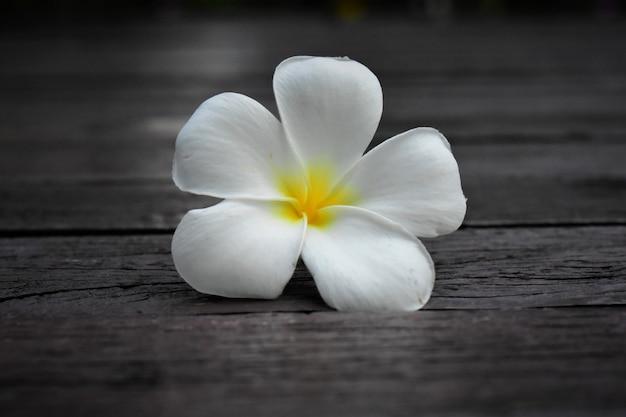 Piękne białe kwiaty wyglądały świeżo na naturalnym tle