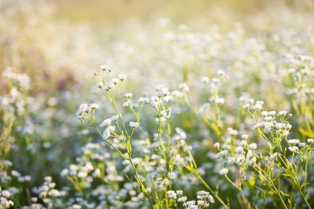 Piękne białe kwiaty z nieostrością i ciepłym nastrojem