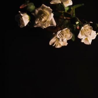 Piękne białe róże