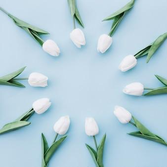 Piękne białe tulipany umieszczone w okręgu na niebieskim tle z miejsca na kopię w centrum