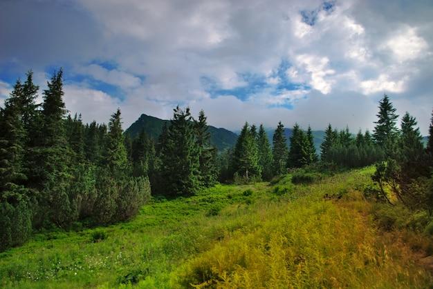 Piękne błękitne niebo i zielona trawa i las w karpatach