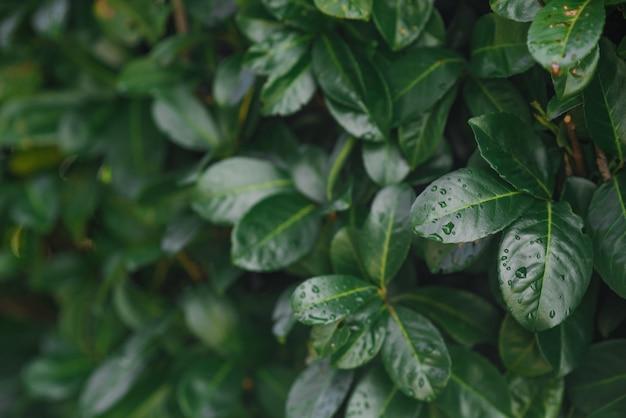 Piękne błyszczące zielone liście. trawa w tle