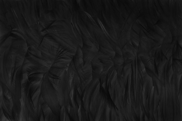Piękne czarne pióro tekstury
