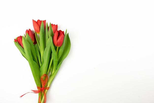Piękne czerwone tulipany leżą na białym tle