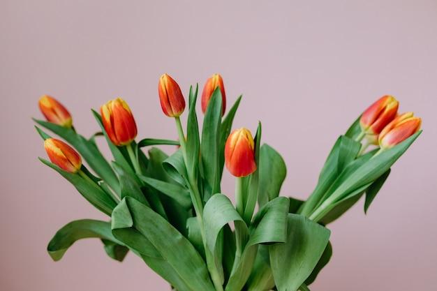 Piękne czerwone tulipany na jasnoróżowym tle europejska kwiaciarnia przygotowuje bukiet tulipanów