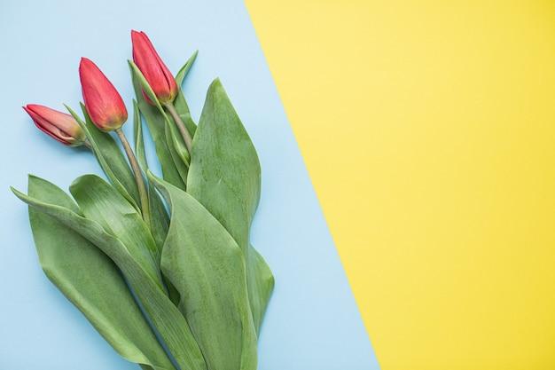 Piękne czerwone tulipany na wielobarwnym tle papieru z miejsca na kopię. wiosna, lato, kwiaty, kolorystyka, dzień kobiet