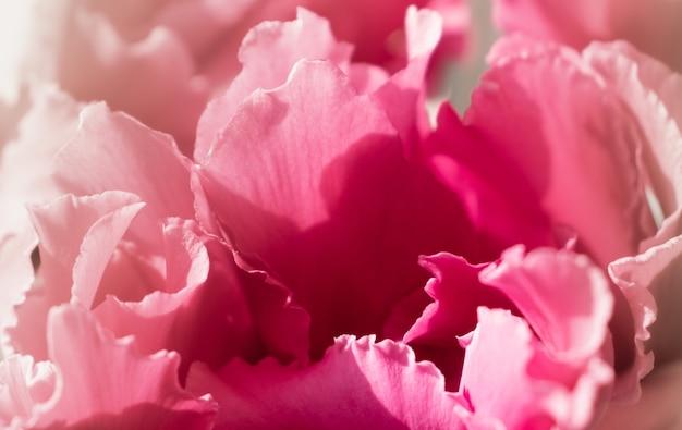 Piękne delikatne płatki zbliżenie kwiat cyklamenów