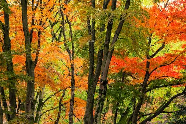 Piękne drzewa jesienią mają jasne kolory