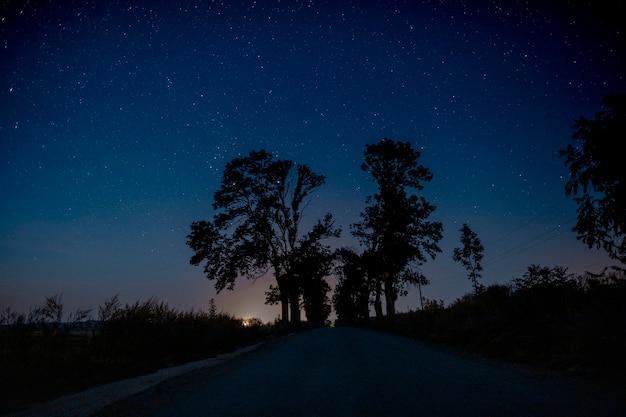 Piękne drzewa na środku drogi w nocy