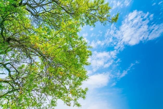 Piękne drzewa oddziału na błękitne niebo.