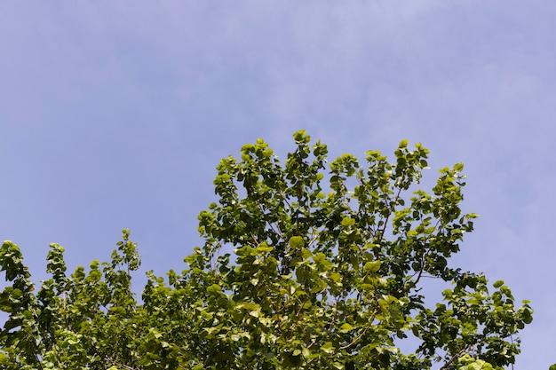 Piękne drzewo i błękitne niebo w tle