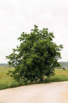 Piękne drzewo na bocznej drodze