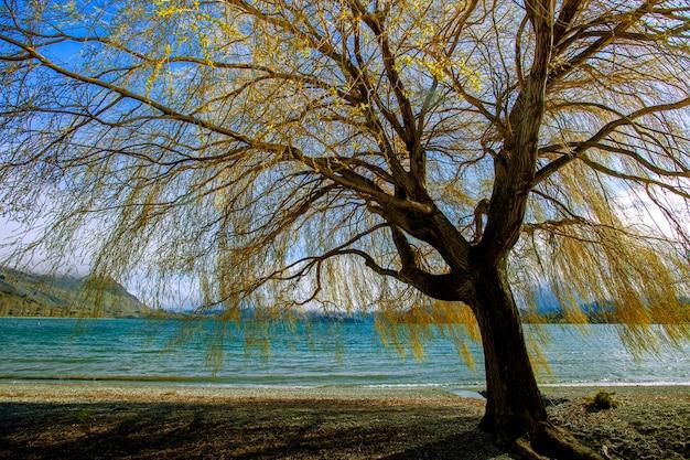 Piękne drzewo nad jeziorem wanaka w południowej części nowej zelandii