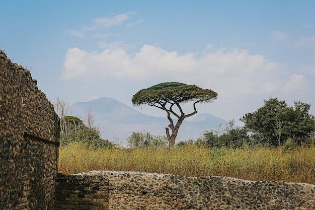 Piękne drzewo przy archeologicznych ruinach pompejów i herkulanum