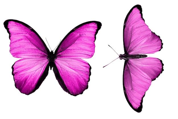 Piękne dwa różowe motyle na białym tle