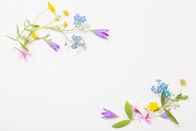 Piękne dzikie kwiaty na białym tle