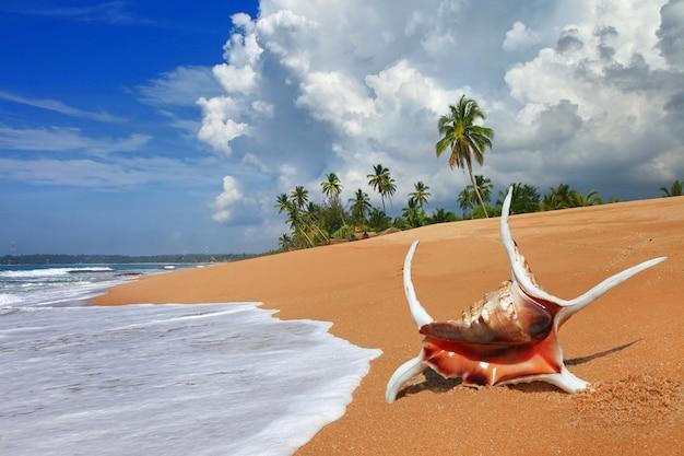 Piękne dzikie plaże sri lanki. wybrzeże tangale na południe od wyspy