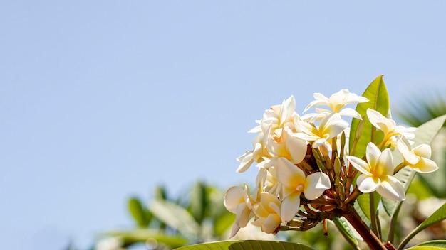 Piękne egzotyczne kwiaty z miejsca na kopię