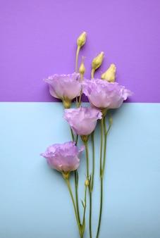 Piękne fioletowe kwiaty eustoma (lisianthus) w pełnym rozkwicie z pąkami liści. bukiet kwiatów na niebieskim tle.