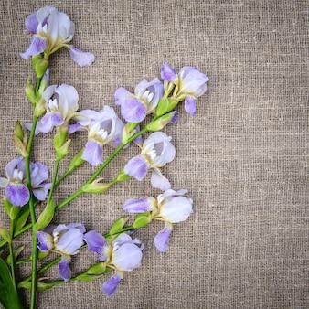 Piękne fioletowe kwiaty irysy na szarym tle płótna, widok z góry