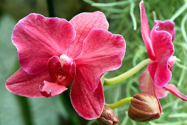 Piękne, fioletowe kwiaty orchidei. złożone zdjęcie makro ze znaczną głębią ostrości.