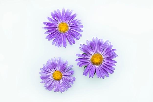 Piękne Fioletowe Kwiaty W Kąpieli Mlecznej. Pojęcie Zabiegów Spa, Relaksacji, Zabiegów Spa, Terapii Premium Zdjęcia