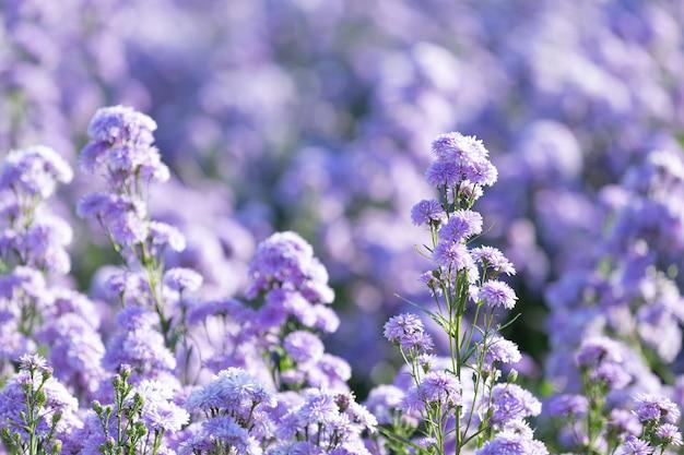 Piękne fioletowe kwiaty w przyrodzie