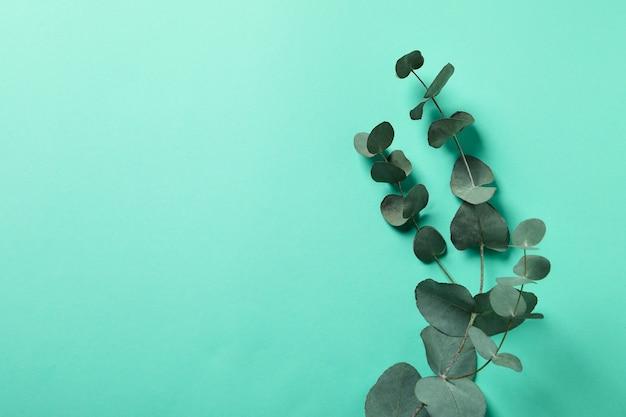 Piękne gałązki eukaliptusa na tle mięty