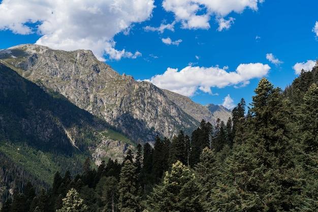 Piękne góry kaukazu, wysokie sosny i błękitne niebo.