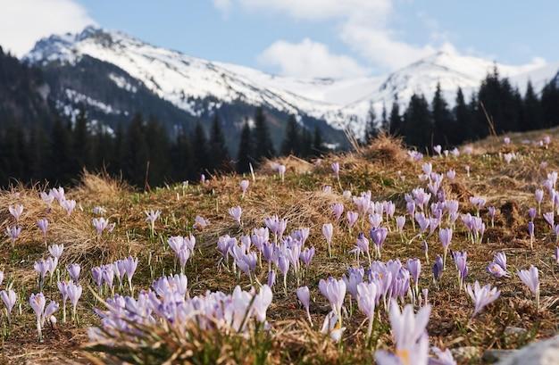 Piękne góry na morawach. widok ziemi kwitnących kwiatów.