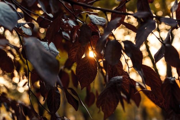 Piękne jesienne liście czerwonego dębu z bliska. jesienny krajobraz w tle.