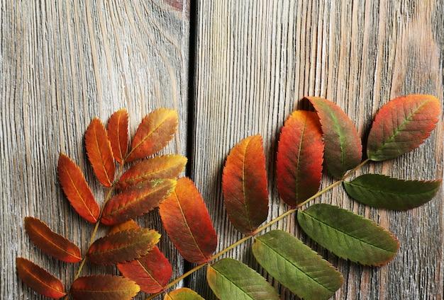 Piękne jesienne liście na drewnianych