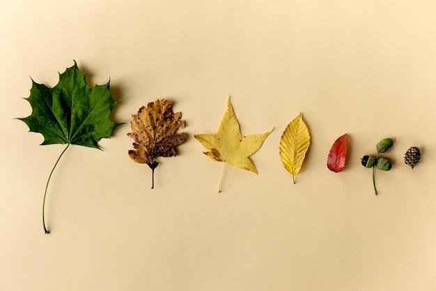 Piękne jesienne liście na pastelowe tło